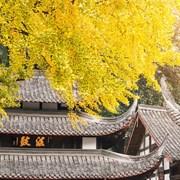 金秋时节的文殊院古建筑
