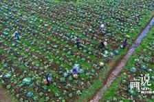 四川泸州:疫情下的服务小分队