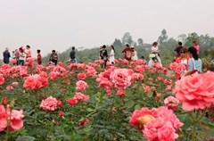 """""""百万玫瑰---梦幻花海""""在特色乡村旅游示范园赏花拍照,伴着花香欢度五一。"""