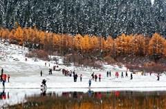 """理县毕棚沟有着""""四季山水,山水世界""""之称,这里的第一场雪来得特别早。10月下旬进到毕棚沟,其时正是深秋红叶季,毕棚沟作为米亚罗红叶风景区的核心区,沟谷里的红叶绽放出仿佛彩笔重染的斑斓,而就在这深红、暗红、橘红、明黄、浅黄、土黄、深绿、浅绿等丰富的色彩中,还有着雪的白,地上、树上、湖畔处处可见那洁白的雪。"""