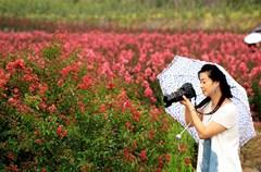 四川省华蓥市在新农村建设中因地制宜大力发展赏花经济,今春引进业主在纯农业镇禄市镇凉水井等村建起2000多亩花卉基地,既扮靓了乡村又增加了农民收入。