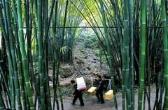 造纸术是我国古代四大发明之,四川省夹江县为竹纸的重要产地。早在清代康熙年间,夹江手工纸便成为上贡朝廷的贡纸。