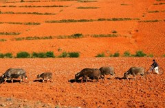 红土高原上三个典型的红土点串联起来:东川红土-干海子红土-格萨拉红土。这三个红土地,论名气,目前东川红土最大,格萨拉红土次之,至于干海子红土,这个攀枝花市北部地区温泉乡辖下的净土,还鲜为人知。