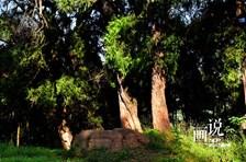 金牛道—巴蜀文明的重要代表