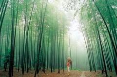 7月13日,2015四川国际文化旅游节新闻发布会在成都召开。据悉,本届文旅节将于8月22日至8月28日在万里长江第一城——四川宜宾隆重举行。文旅节是我省在全球旅游行业中最具影响力的节会之一,为四川与世界加强文化交流,探讨旅游资源保护及发展未来,促进文化与旅游的创意结合,搭建起了一个重要的平台和桥梁。