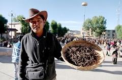 在甘孜州理塘县,每年从五月中旬开始,便会有千千万万的人从甘孜四处赶来,在理塘周边山区,开始他们一年中最为重要的一件事——挖虫草。