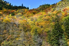 阿坝州除了有九寨沟、黄龙这类蜚声国际的风景名胜区外,还有那层峰叠峦,逶迤绵亘,林木繁茂的梭磨河峡谷也深受游人喜爱,每到秋天层林尽染,景色迷人。