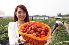 近年来,龙马潭区加大投入力度,重点打造的特兴走马村、长安慈竹村和双加新渔村已经初具规模。