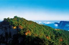 四川地处水热充沛的亚热带季风气候区,森林资源丰富,植被类型多样。各种植物在自己的地盘上愉快地生长着,有的更是成林成海,如万顷碧波汹涌,气势壮观。