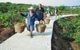 规划到2017年,威远无花果从业人员将达15万人,他们将以自己的辛勤劳作获取丰收果实。
