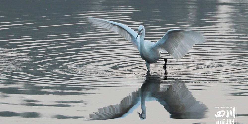 乡村冬趣 鹭舞池塘