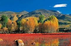 红,是一种鲜艳的颜色,耀眼夺目。大自然这位调色师,用红色点染着四川这块土地,处处可见那热烈的红。