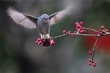 小鸟也有好奇心