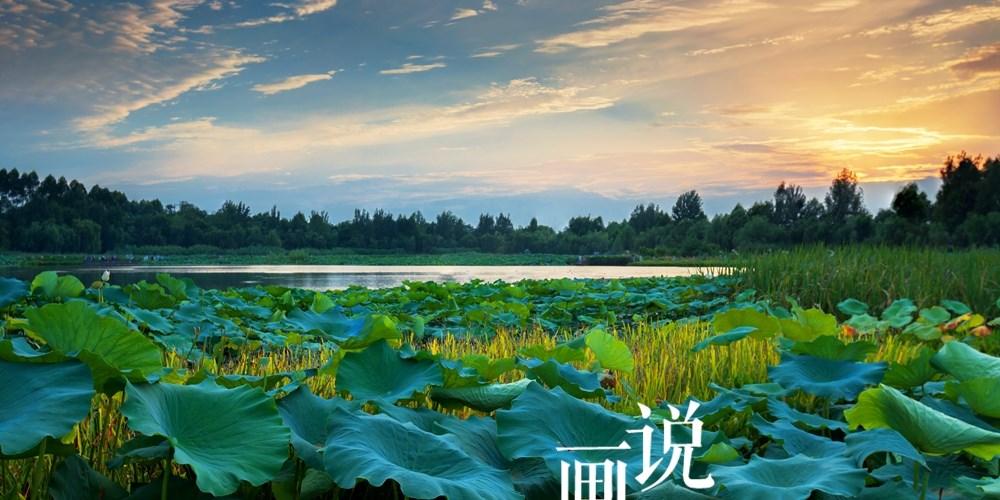 """2018""""花开蓉城•赏荷锦江"""" 荷花主题摄影展入展作品欣赏"""