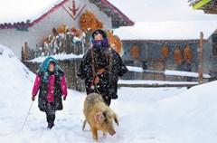 """冬日里,冶勒彝家村寨的屋顶上、地上都是厚厚的积雪,阳光照在篱笆上投射在积雪上的阴影、赶着羊群在雪地里行走的彝人以及远处的雪山,都让这里看上去是如此的宁静。也许,这就是我们要寻找的雪乡——大凉山的""""雪乡""""。"""