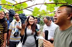 2015年7月4日,尼泊尔、泰国、阿富汗、巴基斯坦等国的20多名葡萄栽培技术人员,专程来到四川省双流县永安镇学习葡萄避雨等先进栽培技术。