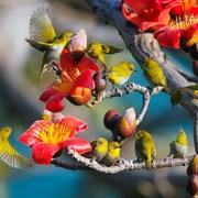 攀枝花与鸟